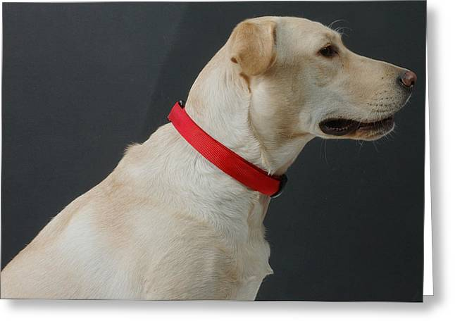 Yellow Lab Greeting Card by Jerry McElroy