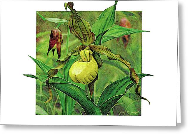 Yellow Lady Slipper Greeting Card by JQ Licensing