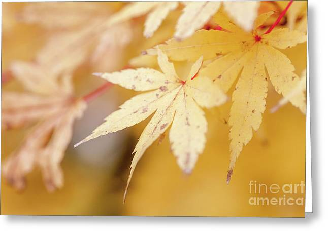 Yellow Leaf With Red Veins Greeting Card