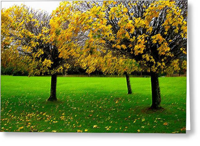 Yellow Leaves At Muckross Gardens Killarney Greeting Card