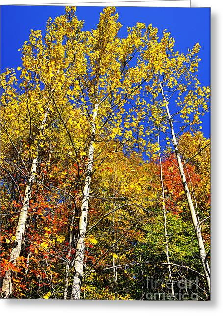 Yellow Leaves Blue Sky Greeting Card