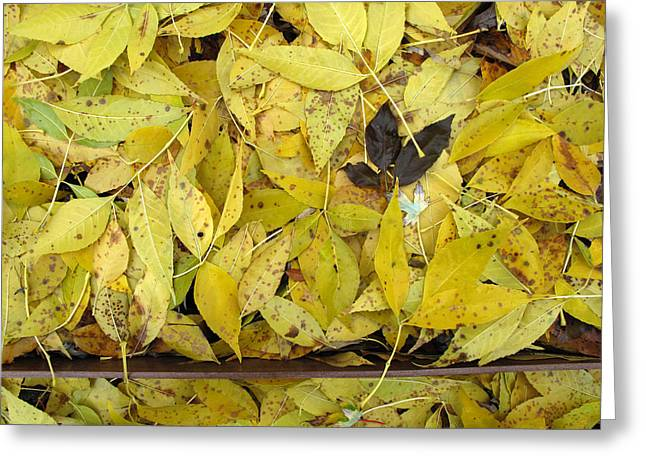 Yellow Leaves On The Ground  Greeting Card by Lyle Crump