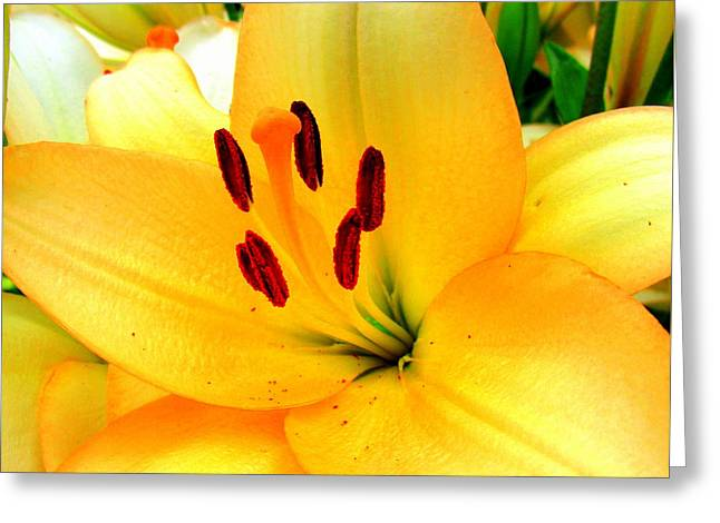 Greeting Card featuring the photograph Yellow Lilies 1 by Randall Weidner
