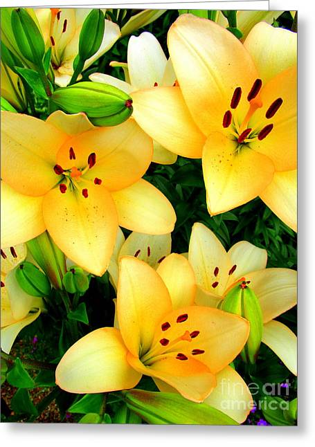 Greeting Card featuring the photograph Yellow Lilies 3 by Randall Weidner
