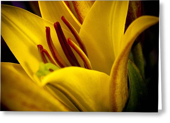 Yellow Lily Greeting Card by David Patterson