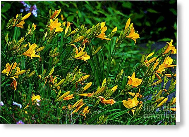 Greeting Card featuring the photograph Yellow Lily Flowers by Susanne Van Hulst