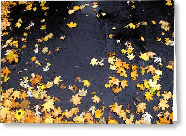 Yellow Maple Leaves On Pavement  Greeting Card by Lyle Crump