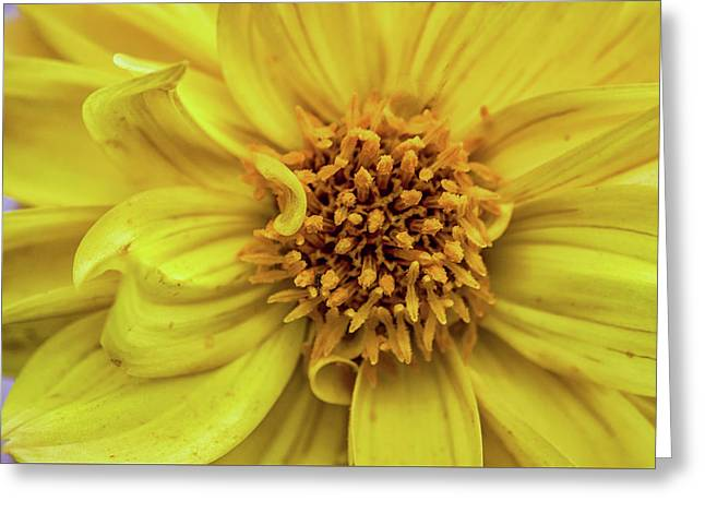 Yellow Greeting Card by Martin Newman