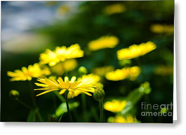 Yellow Moment Greeting Card