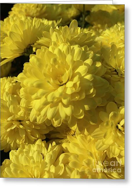 Yellow Mums Greeting Card