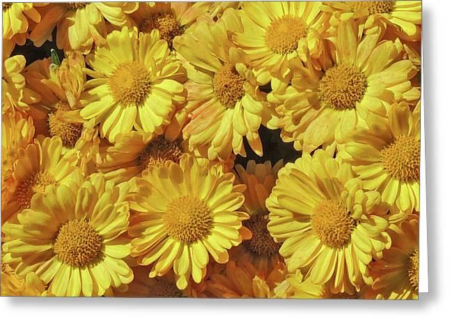 Yellow Mums Too Greeting Card