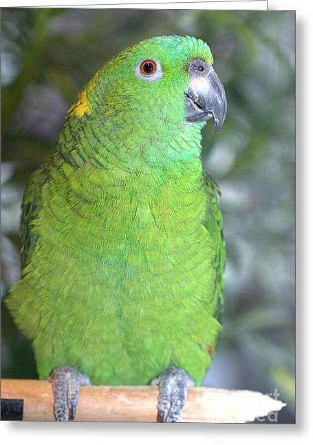 Greeting Card featuring the photograph Yellow-naped Amazon by Debbie Stahre
