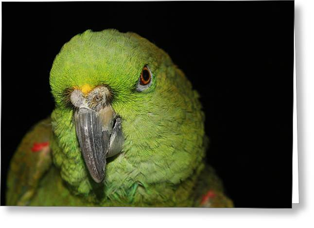 Yellow-naped Amazon Parrot Greeting Card by Alexander Butler