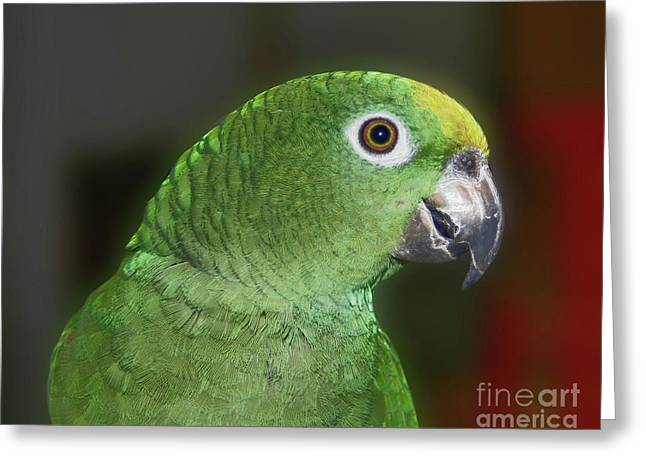 Yellow Naped Amazon Parrot Greeting Card by Smilin Eyes  Treasures