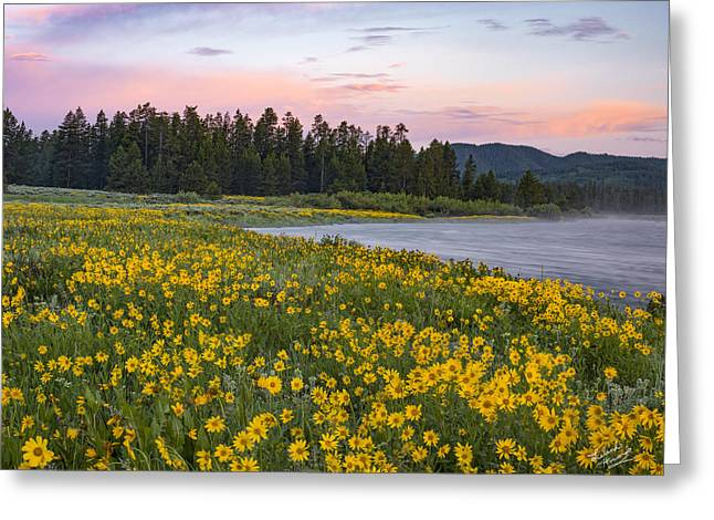 Yellow Of Spring Greeting Card