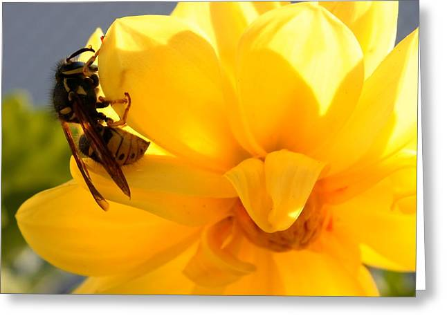 Yellow On Yellow Greeting Card by Marjorie Imbeau