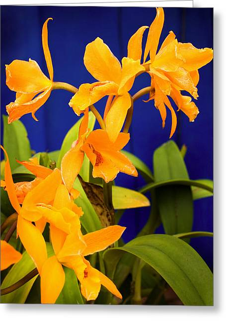yellow Orange Orchids Greeting Card
