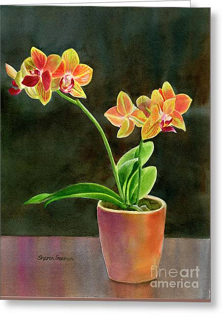 Yellow Orchid In A Pot With Dark Background Greeting Card by Sharon Freeman