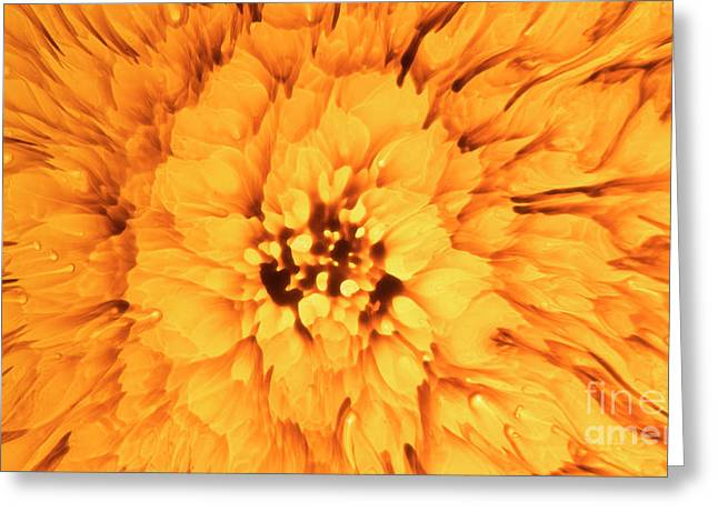 Yellow Flower Under The Microscope Greeting Card