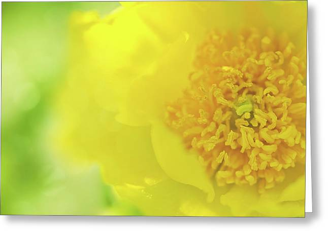Yellow Peony Greeting Card by Margaret Goodwin