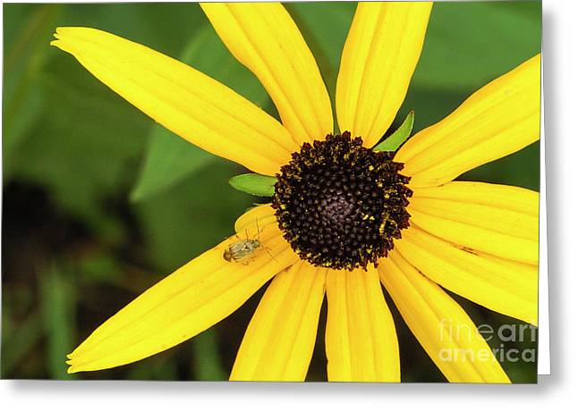Yellow Petaled Flower With Bug Greeting Card