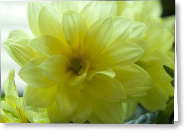Yellow Petals Bathing In Sunlight Greeting Card by M Valeriano