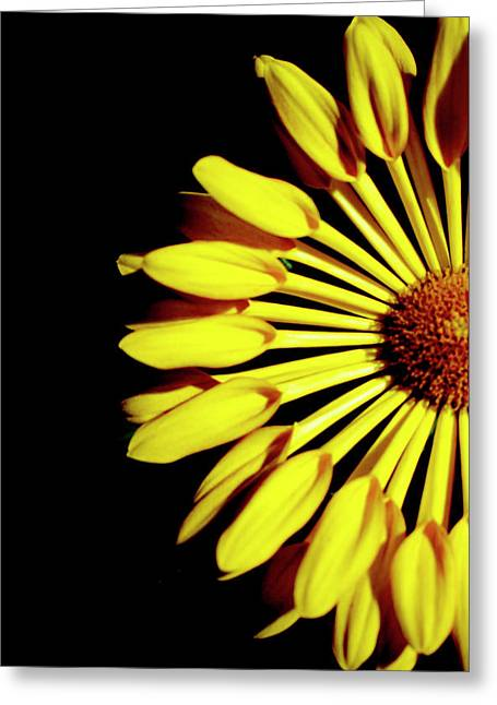 Yellow Petals Greeting Card