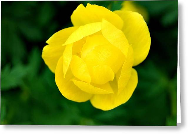 Yellow Petals Greeting Card by Marilynne Bull