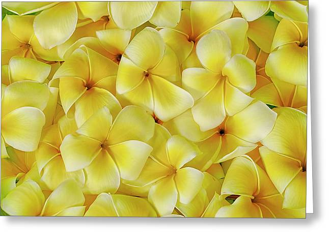 Yellow Plumerias Greeting Card