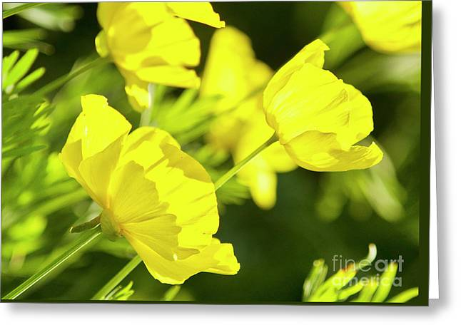 Yellow Poppies I Greeting Card