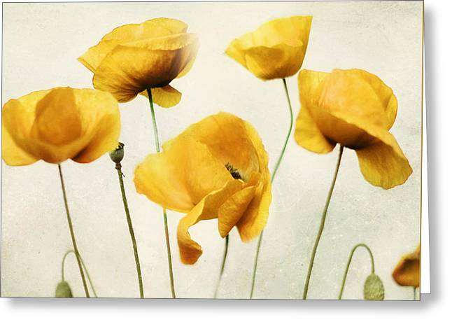 Yellow Poppies - Square Version Greeting Card by Amy Tyler