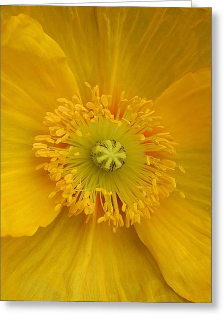 Yellow Poppy Flower Center Greeting Card