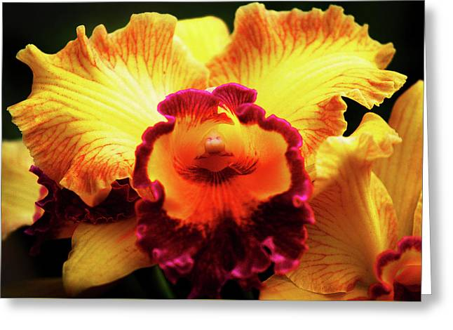 Greeting Card featuring the photograph Yellow-purple Orchid by Anthony Jones
