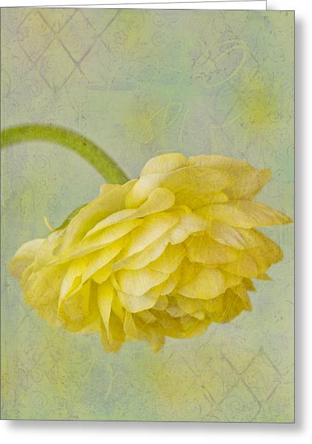 Yellow Ranunculus Macro Greeting Card by Sandra Foster