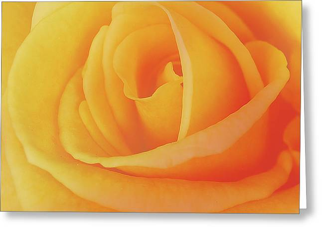Yellow Rose 4788 Greeting Card by Michael Peychich