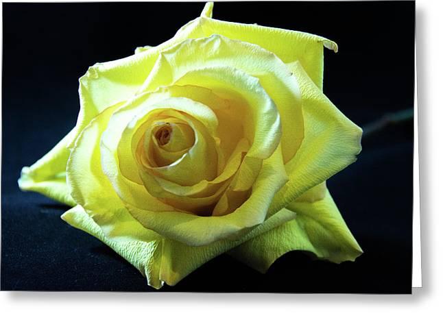 Yellow Rose-7 Greeting Card