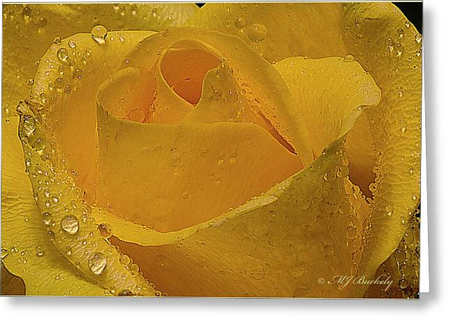 Yellow Rose And Dew Greeting Card by Marti Buckely