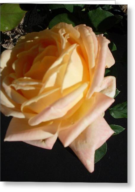 Yellow Rose Beauty Greeting Card by Warren Thompson