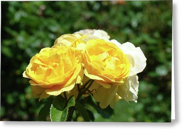 Yellow Rose Bouquet Art Print Roses Garden Baslee Troutman Greeting Card