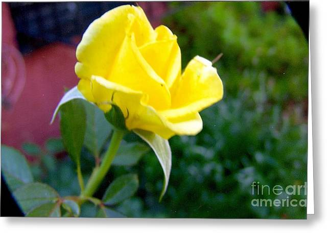 Yellow Rose Bud Greeting Card by Rod Ismay