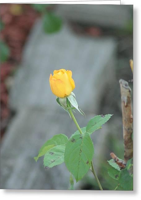 Yellow Rose Bud Greeting Card by ShadowWalker RavenEyes Dibler