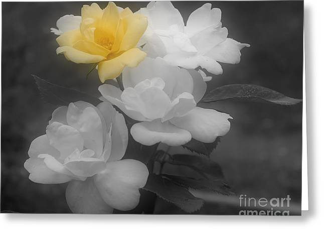 Yellow Rose Cluster Partial Color Greeting Card
