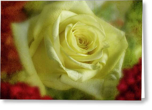 Yellow Rose Greeting Card by Garry McMichael