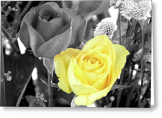 Selective Colouring Greeting Cards - Yellow Rose Greeting Card by Graham Taylor