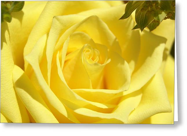 Greeting Card featuring the photograph Yellow Rose by Heidi Poulin