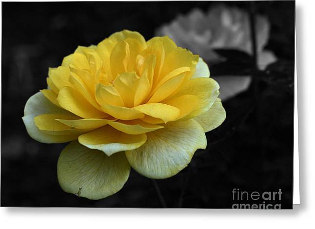 Yellow Rose In Bloom Greeting Card by Smilin Eyes  Treasures
