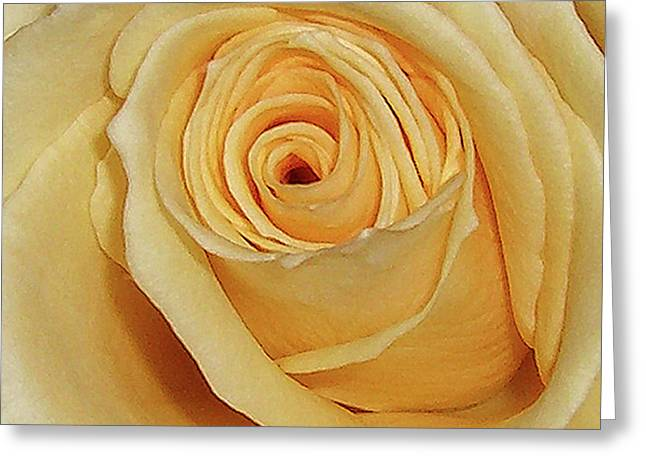 Greeting Card featuring the photograph Yellow Rose by Merton Allen