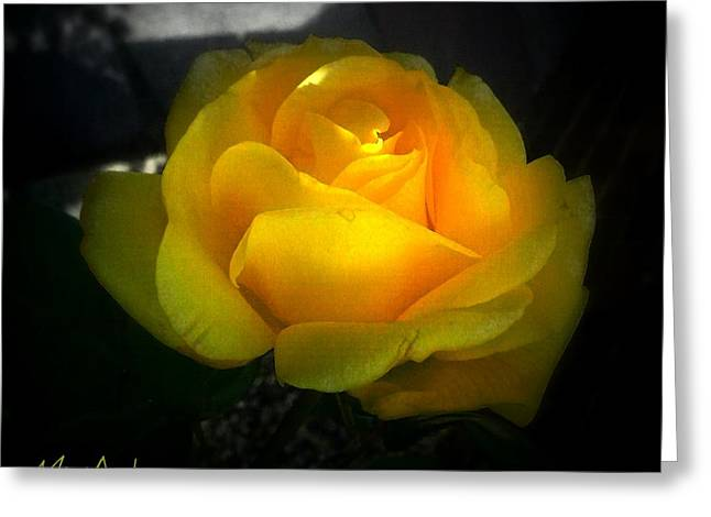 Yellow Rose Greeting Card by Miriam Shaw