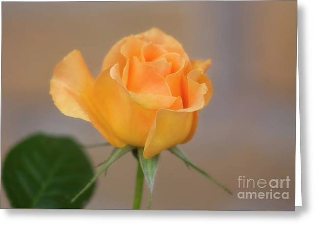 Yellow Rose Of Texas Greeting Card by Joan Bertucci