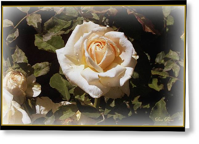 Yellow Rose Of Texas Greeting Card by Trina Prenzi